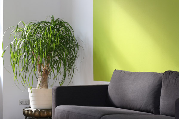 Internal Paint